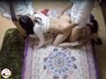 [NZK-002] 【大家告発】素人男女8名が所構わずヤリまくる!超生々しい…シェアハウス入居者同士のSEX盗撮。