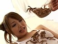 [DVUMA-128] 超食虫美少女2 ウンコゴキブリミミズユッケを喰う女