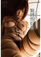 「紗倉まな 緊縛性奴隷」のパッケージ画像