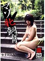 (29dmtc22)[DMTC-022] マゾ牝飼育 小手川あみ ダウンロード