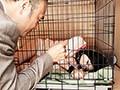 [EMJD-002] 飼育された人妻 檻中の監禁奴隷