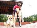 犬の散歩中の人妻にイタズラ 11