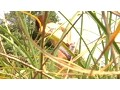 (h_959aba00011)[ABA-011] 実録盗撮 江の島発海の家で着替える水着素人ギャル盗撮 ダウンロード 4