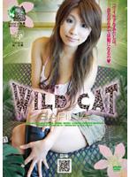 WILD CAT SARINA