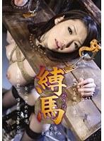 Watch Bondage Tied Horse - Azumi Mizushima