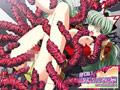 女子校生・変身ヒロイン・魔法少女・恋愛・バトル・デモ・体験版あり・学園もの・Route2 バレンタイン半額セール!