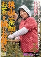 狭山の茶畑でお茶を摘むお母さん 堀池忍 ダウンロード