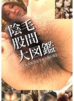 股間陰毛大図鑑1 ダウンロード