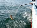 (55avop00206)[AVOP-206] 釣りバカおじさん日記 〜マドンナ初美沙希ちゃんとキス釣りチャレンジ!!〜 ダウンロード 6