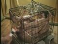 (86axdvd00218r)[AXDVD-218] 人妻誘拐飼育 メス豚奴隷調教 ダウンロード 8
