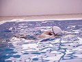 たくましい肉体の美女アスリート 本物競泳選手(現在スポーツインストラクター) E-BODY専属デビュー 武田真