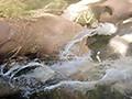 水中姦華イラマ-喉奥犯●れ華咲かせ- 片岡なぎさ