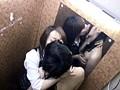 (h_254wan00053)[WAN-053] 下着試着室で女性店員レズ痴漢 ダウンロード 5