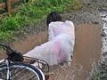 (juc00724)[JUC-724] 晴れ時々、雨 〜濡れ透ける人妻の下着と柔肌〜 羽月希 ダウンロード 4