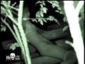 (ktme00008)[KTME-008] リアル盗撮!夜の公園で青姦カップルを激撮!! ダウンロード 4