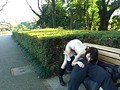 (pyld00081)[PYLD-081] 露出中毒〜見られる悦楽に堕ちる熟女たち ダウンロード 7