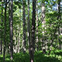 自然音 - 北八ヶ岳 - 朝の風景01 (バイノーラル録音) d_172385のパッケージ画像