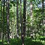 自然音 - 南信濃 - 滝01 (バイノーラル録音) d_172389のパッケージ画像