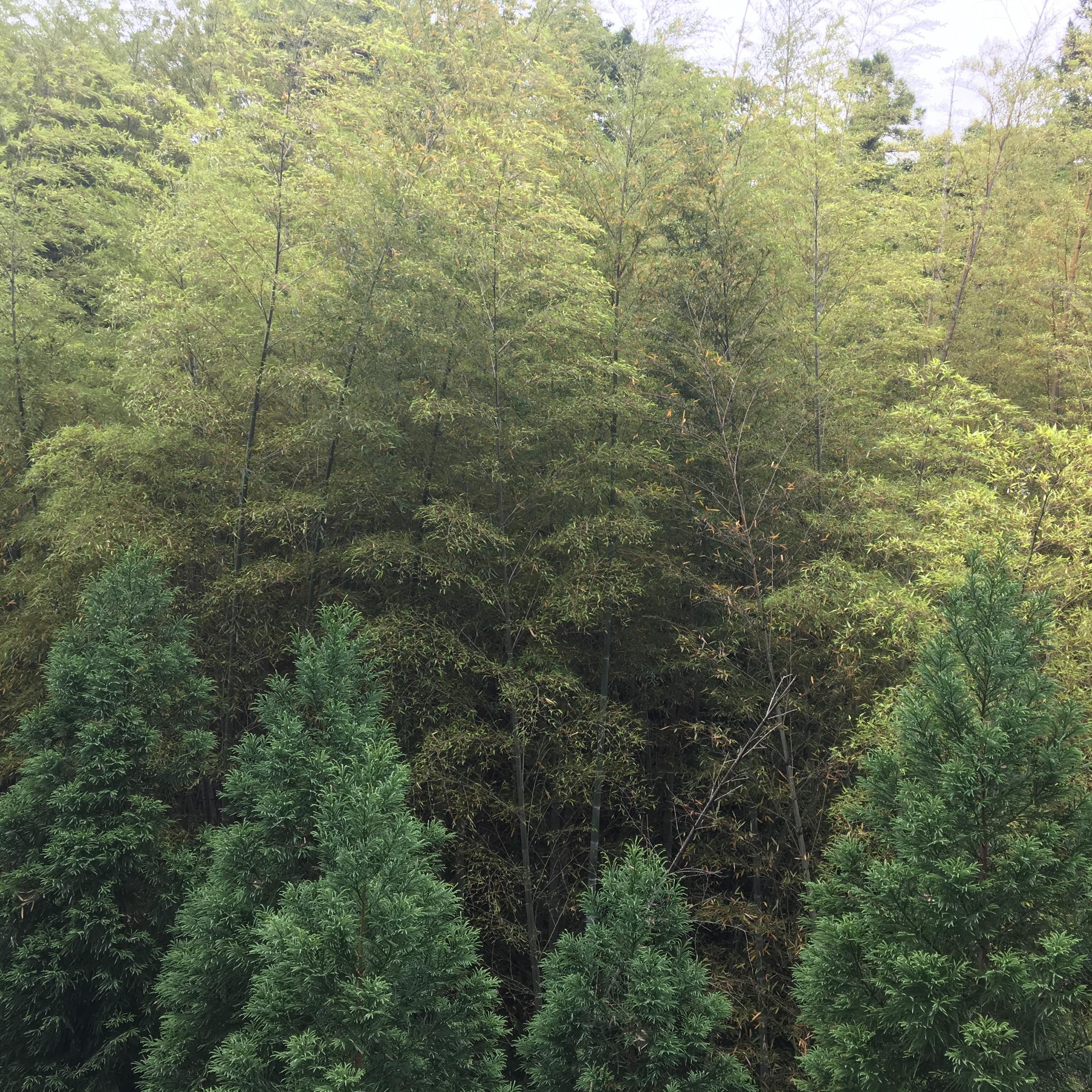 自然音 - 岐阜 / 恵那 - 渓流01 (バイノーラル録音)