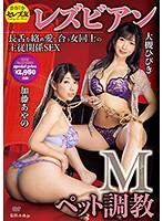 【DMM限定】Mペット調教レズビアン 大槻ひびき 加藤あやの パンティ付き