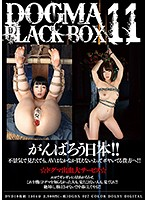 DOGMA BLACK BOX 11
