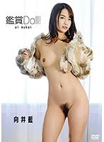 【数量限定】観賞 Doll!/向井藍 チェキ付き